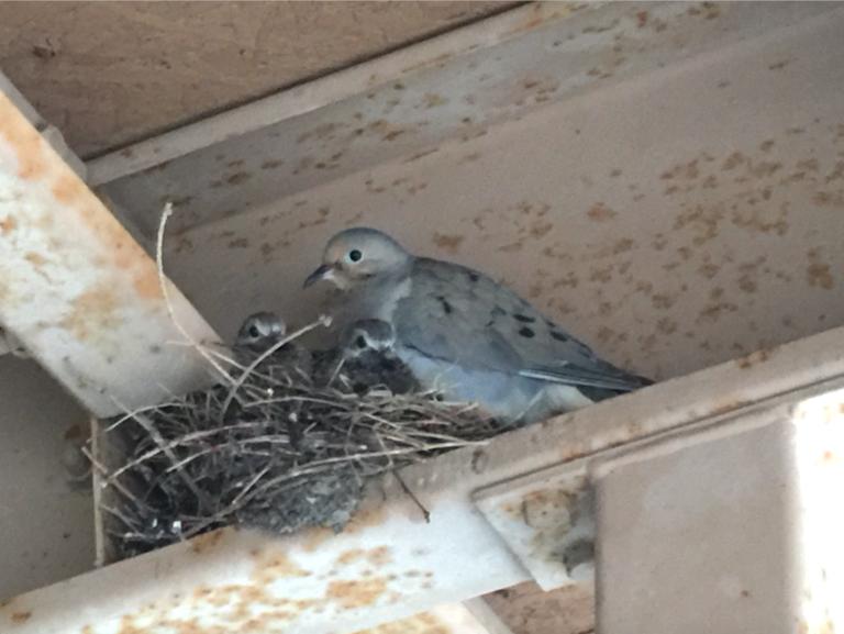 Birds June 5