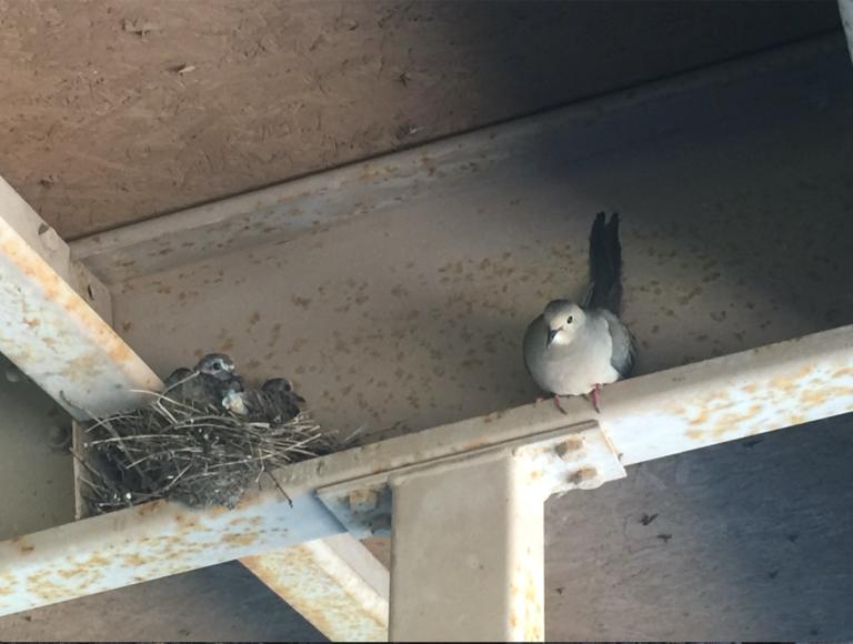 Birds June 4
