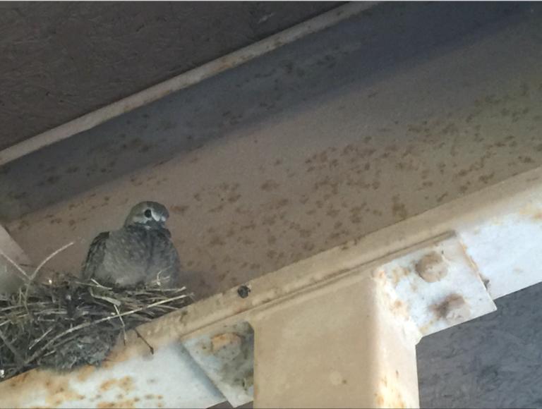 Birds June 8